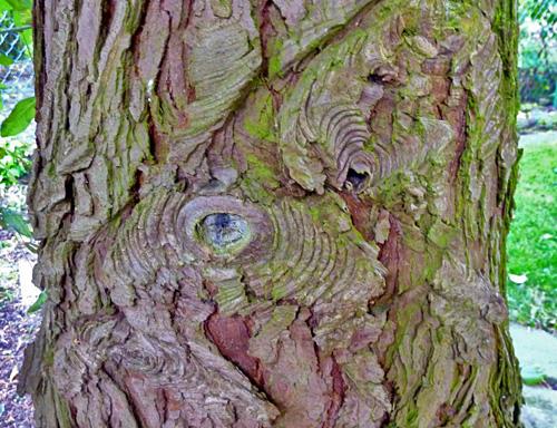 De Levensboom - Boomgeister