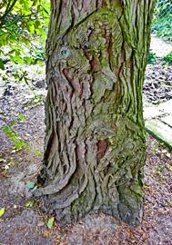 De Levensboom - Baumstamm