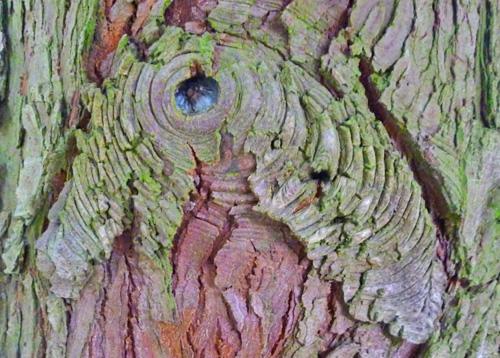 De Levensboom - Edelstein