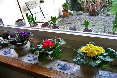 Fensterbrett mit Fröhblöher